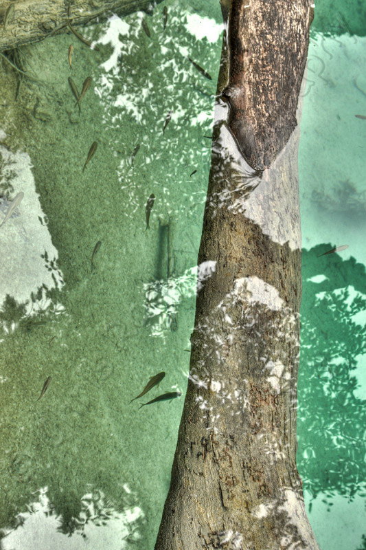 Jiuzhaigou Fish and Branch