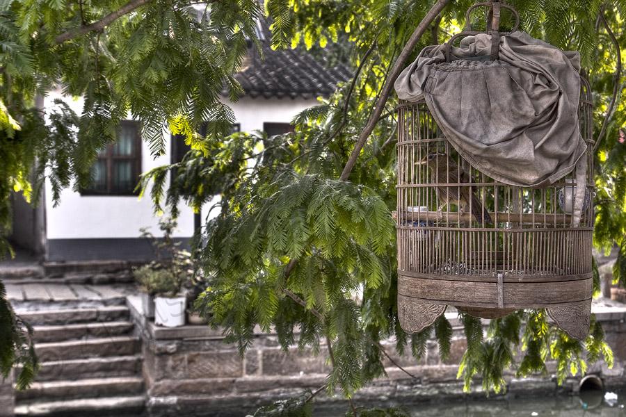 Bird in a cage Zhu Jia Jiao