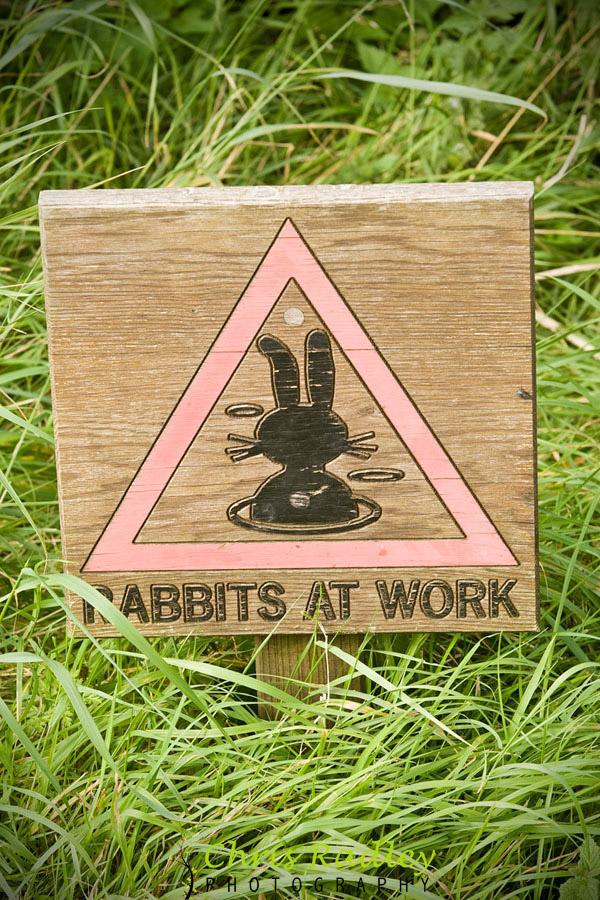 Rabbits at Work Yorkshire