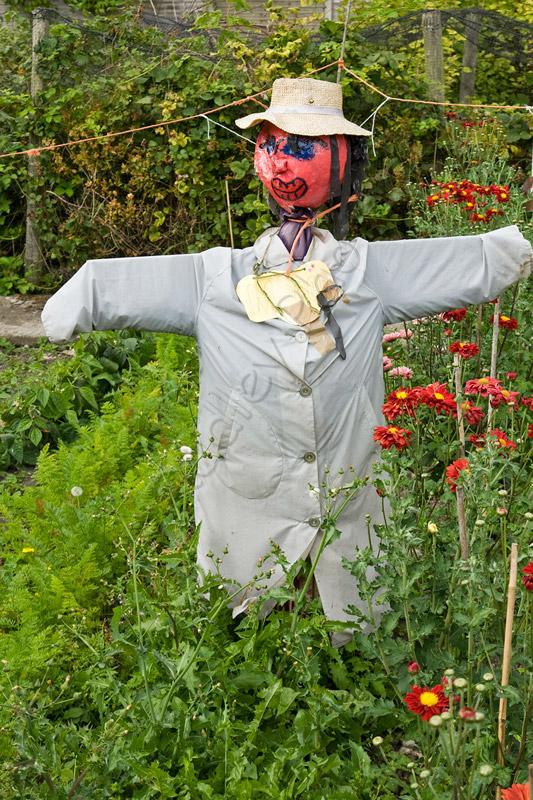 Yorkshire scarecrow